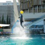 Yalta_Dolphinarium