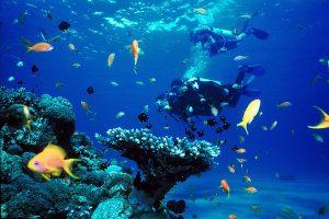 Eilat_diving